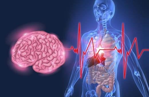 ¿Cómo afectan las emociones al sistema inmunológico?