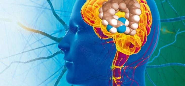 La plasticidad cerebral del cerebro que cura