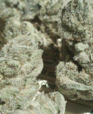 Buy White OG strain online | White OG strain for sale | White OG