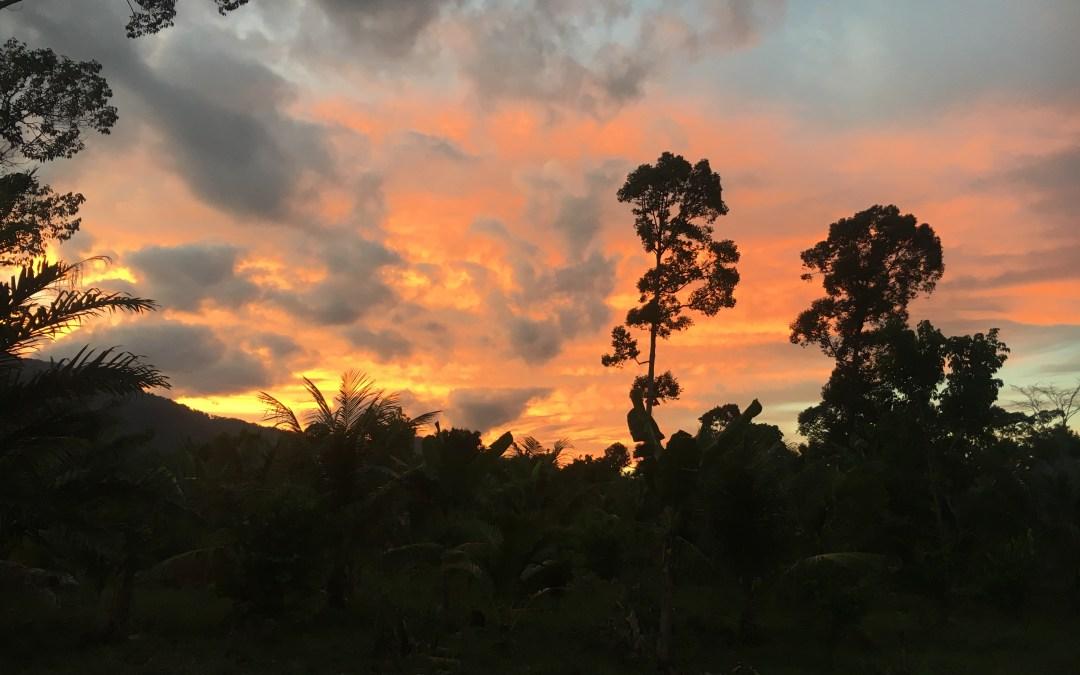 Por qué decidí volver a Sumatra