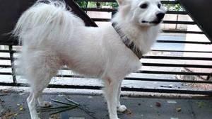 "Dog Abandoned Due To ""illicit relationship""."