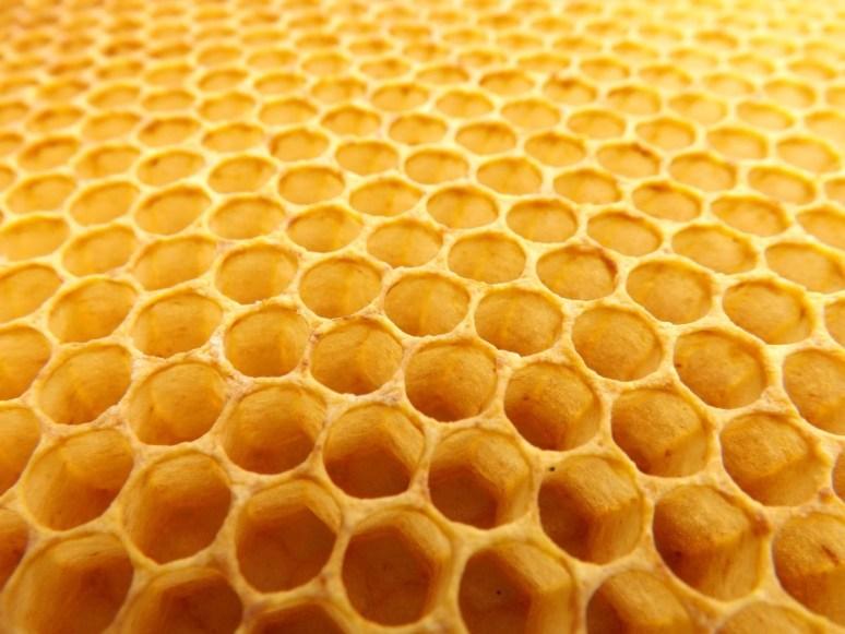 honeycomb_beekeeping_beehive-923608.jpg!d.jpeg