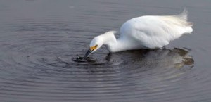 Sumi-bird-large