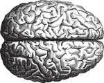 old-time-engraving-of-the-brain_11131276