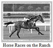 serak-la-storia-horse