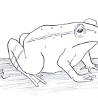 The Frog Contractor