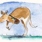 Charlie's Room: Visiting Kangaroo