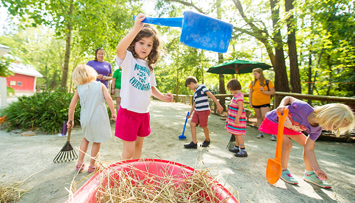 Campers help shovel hay