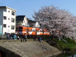 流星号と桜