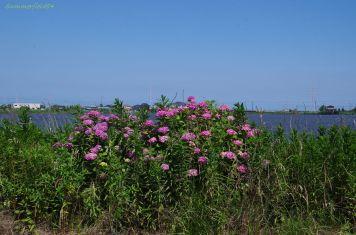 紫陽花と与田浦