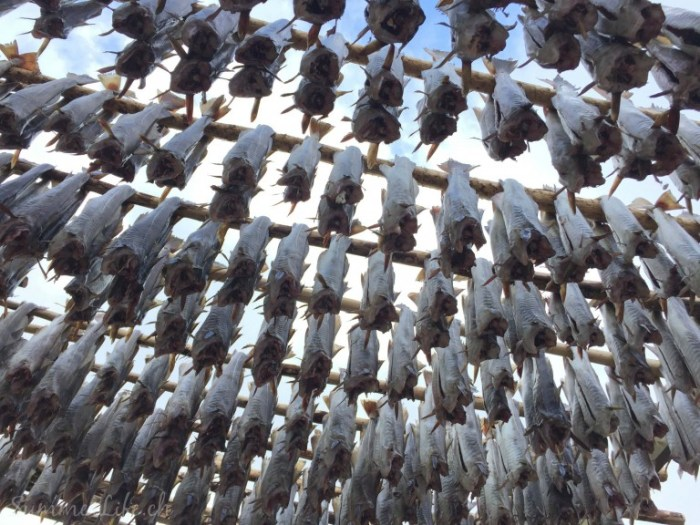 Stockfish-Heaven-Lofoten