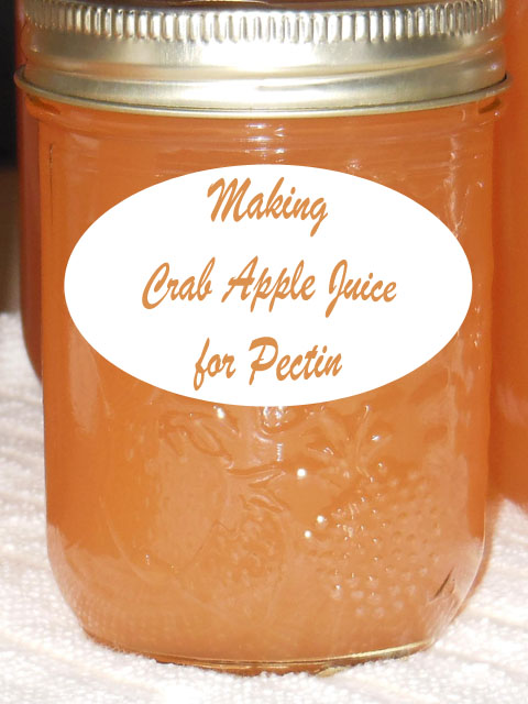 Crab apple Juice for pectin