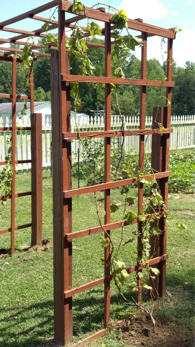 Garden Fence/Grapevine Trellis