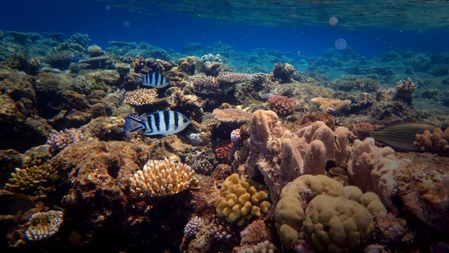 Underwater at the Great Barrier Reef; Cairns, Australia.
