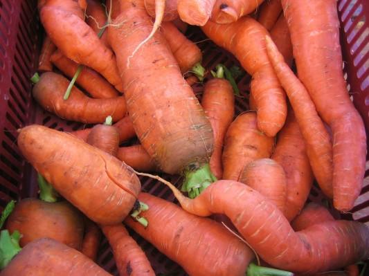 jumbo carrots