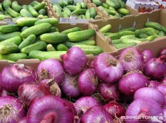 Purple Onions & Cucumbers