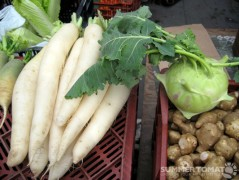 Daikon, Kohlrabi and Sunchokes