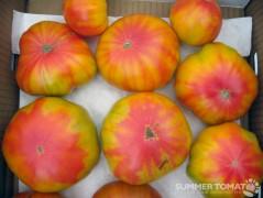 Crazy Tomatoes