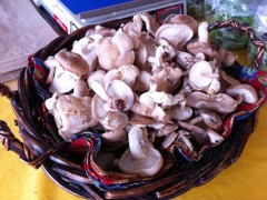 Shiitake Mushrooms and Salad Lettuce from Homestead Growers