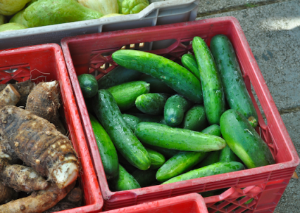 Cucumber, Name and Chayote