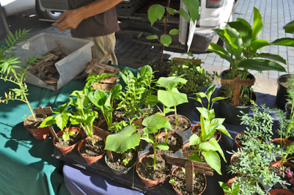 Desde Mi Huerto Potted Herbs and Vegetable Plants
