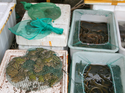 Frogs, Snakes and Eels