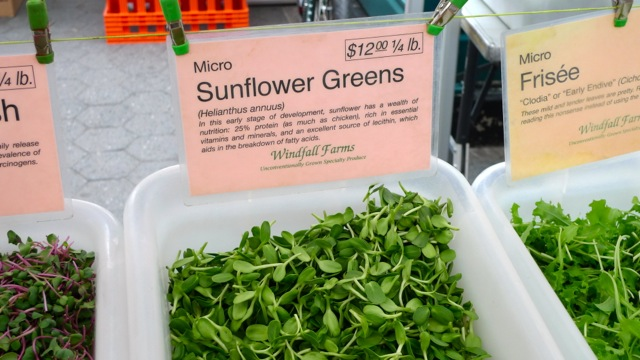 Micro Sunflower Greens