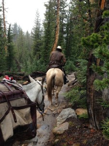 Pack mules coming back from resupplying the Sunrise High Sierra Camp
