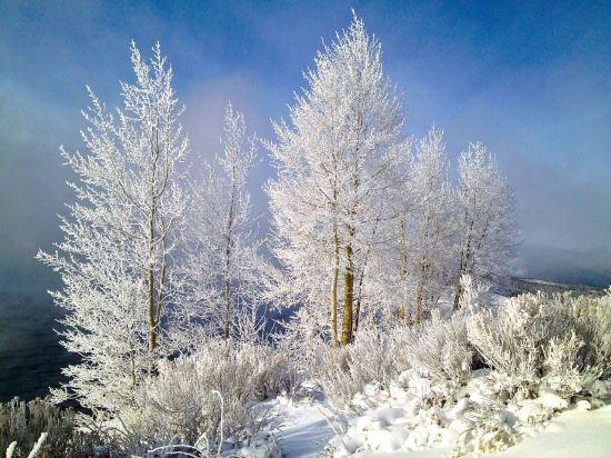 Winter's grace.