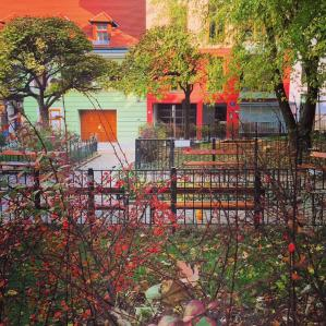 Fall colors in Spittelberg, one of Vienna's classic downtown neighborhoods.