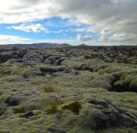 Moss on lava south of Reykjavik.