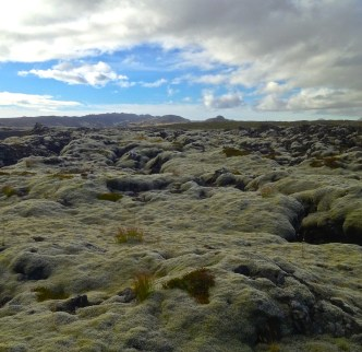 Moss on lava south of Reykjavik.