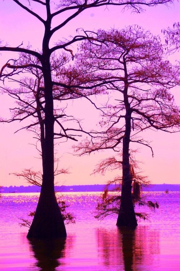 Caddo Lake in the morning