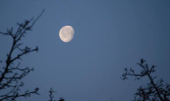 The moon glows at dusk over Lexington