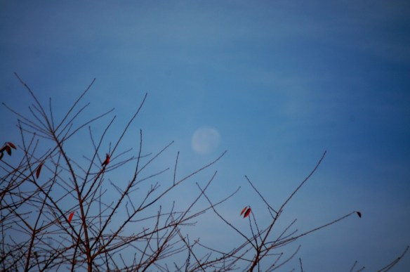 Morning Moon in the blue sky