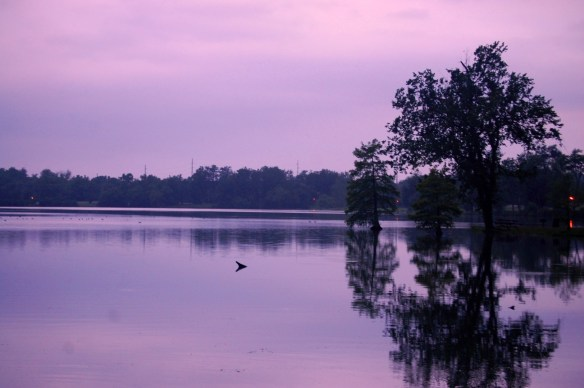Beautiful morning on the lake