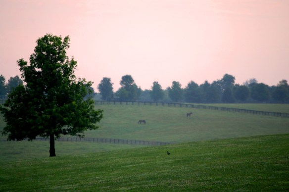 Horse farm as seen from Walnut Hill Road near Lexington