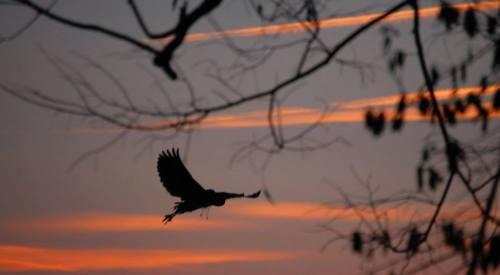 Birds in Graceful Flight