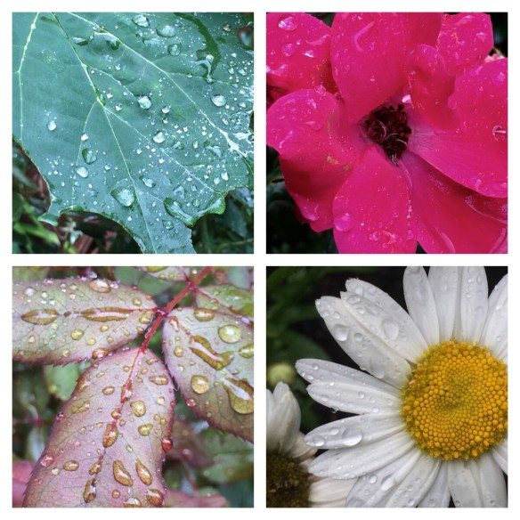 Flowers and raindrops
