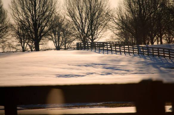 Tranquil Snowscapes