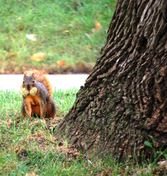 Squirrel with food storage