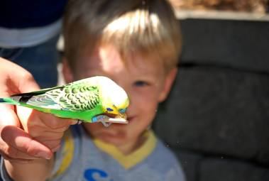 Benson and a budgie at Tacoma Zoo 2015