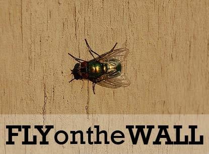 FlyOnWall
