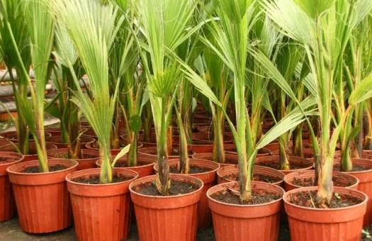 best soil for cat palms