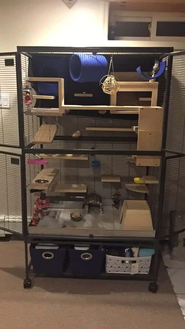 5 Best Ferret Cage Compared Amp Reviewed 2018 Buyers Guide