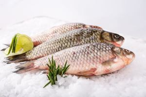 Fish and Seafood   Sump & Stammer GmbH   International Food Supply - Choose the fish and seafood specialties you prefer and get them delivered to wherever you are. Fish Whole - Fish Fillets - Seafood - Smoked Fish - Canned Fish
