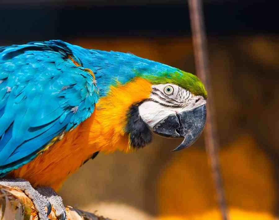 Exotic Pet Ownership Checklist