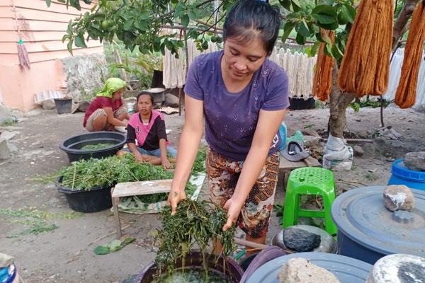 PEWARNA ALAMI: Sejumlah penenun ulos di Desa Silalahi Kecamatan Silahisabungan binaan Dekranasda Dairi serta PT Inalum menggunakan bahan alami pewarna bahan tenun.