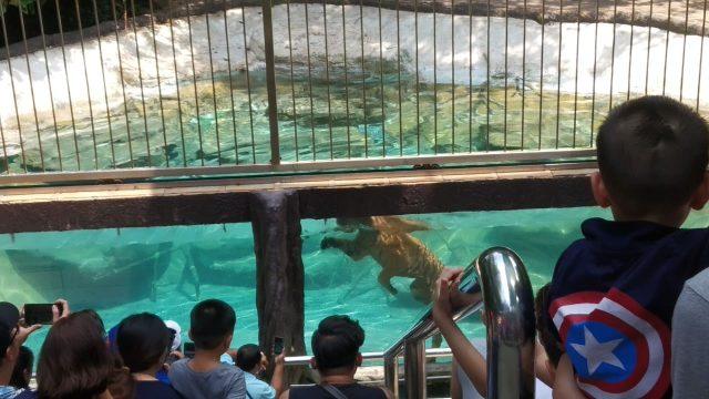 Зоопарк Кхао-Кхео вПаттайе
