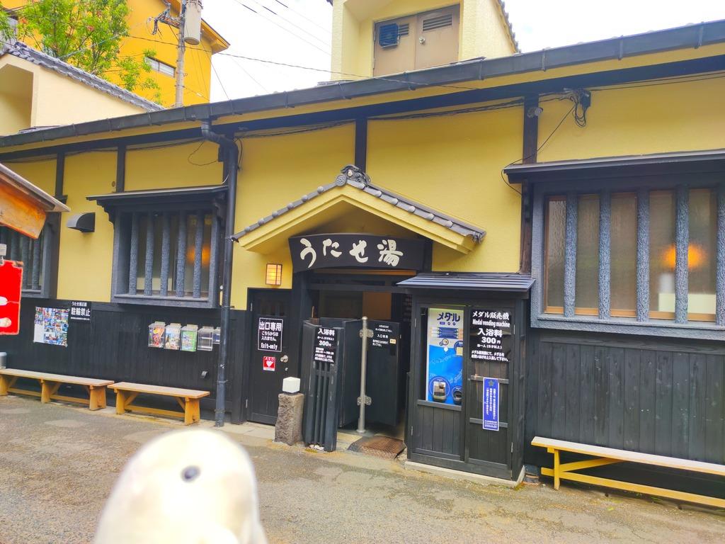 【筋湯温泉 うたせ湯】日本一の打たせ湯のダイナミック温泉!温泉成分と打たせ湯圧を両方楽しめる♨